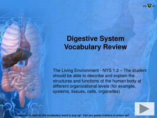 Digestive System Vocabulary Review