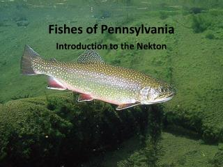 Fishes of Pennsylvania