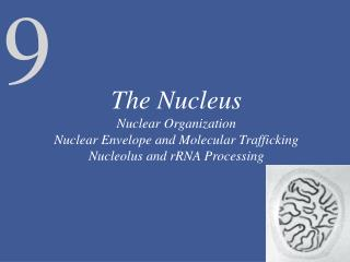 The Structure and Function of the Nuclear Envelope