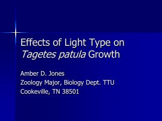 Effects of Light Type on Tagetes patula Growth