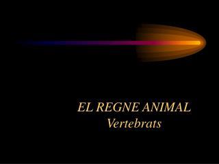 Regne Animal – Grups principals