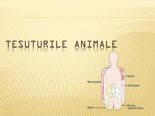 TE SUTURILE ANIMALE