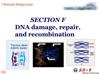 Molecular Biology Course