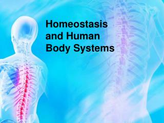 Homeostasis and Human Body Systems
