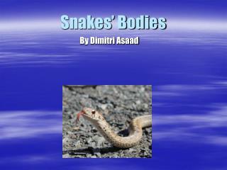 Snakes' Bodies