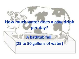 How much water does a cow drink per day?