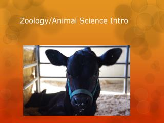 Zoology/Animal Science Intro