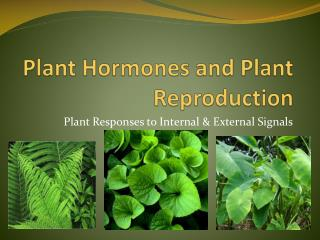 Plant Hormones and Plant Reproduction