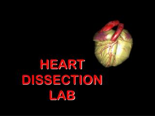 HEART DISSECTION LAB
