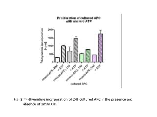 Fig. 2 3 H-thymidine incorporation of 24h cultured APC in the presence and absence of 1mM ATP.