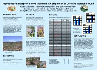 Reproductive Biology of  Larrea tridentata : A Comparison of Core and Isolated Shrubs