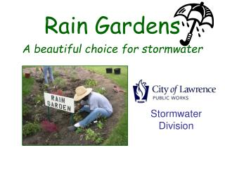 Rain Gardens A beautiful choice for stormwater
