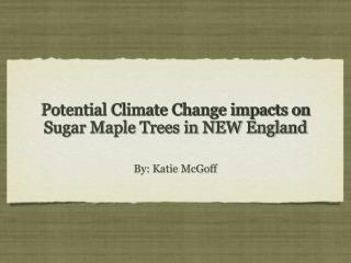 Potential Climate Change impacts on Sugar Maple Trees in NEW England