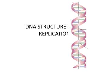 DNA STRUCTURE & 		REPLICATION