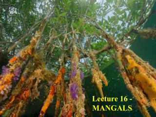 Lecture 16 - MANGALS