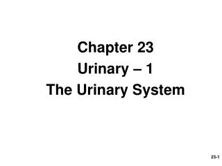 Chapter 23 Urinary – 1 The Urinary System