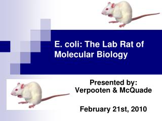 E. coli: The Lab Rat of Molecular Biology