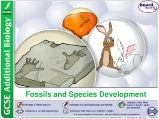Fossils and Species Development