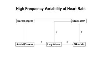 High Frequency Variability of Heart Rate