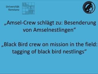 """""""Amsel-Crew schlägt zu: Besenderung von Amselnestlingen """""""