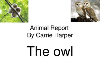 Animal Report By Carrie Harper