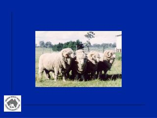 Genetic improvement of Merino sheep in Australia