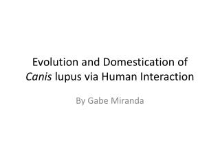 Evolution and Domestication of  Canis  lupus via Human Interaction