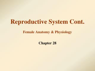 Reproductive System Cont. Female Anatomy & Physiology