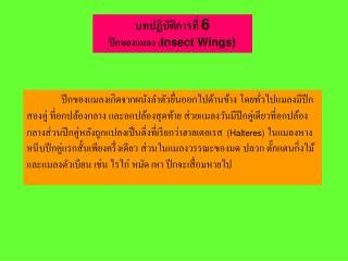 บทปฏิบัติการที่ 6 ปีกของแมลง ( Insect Wings)
