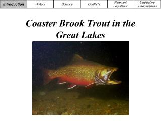 Coaster Brook Trout in the Great Lakes