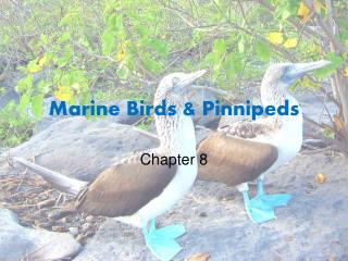 Marine Birds & Pinnipeds