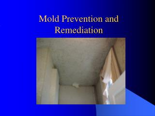 Mold Prevention and Remediation