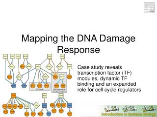 Mapping the DNA Damage Response