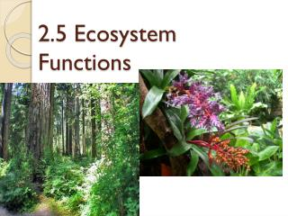 2.5 Ecosystem Functions