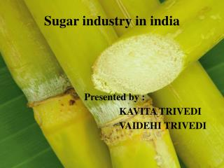 Sugar industry in india