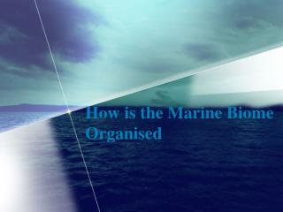 How is the Marine Biome Organised