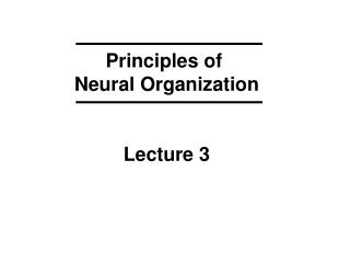 Principles of Neural Organization Lecture 3
