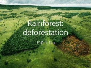 Rainforest: deforestation