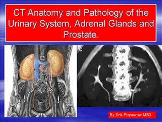 CT Anatomy and Pathology of the Urinary System, Adrenal Glands and Prostate.