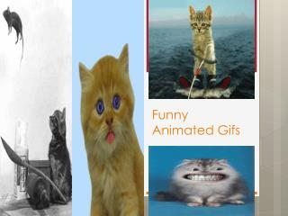 Funny Animated Gifs