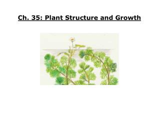 Ch. 35: Plant Structure and Growth