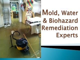 Mold, Water & Biohazard Remediation Experts