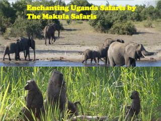 Enchanting Uganda Safaris by The Makula Safaris