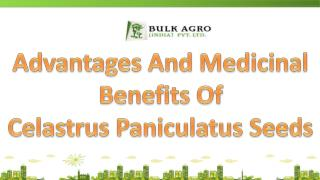 Advantages And Medicinal Benefits Celastrus Paniculatus Seed