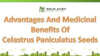 Advantages And Medicinal Benefits Celastrus Paniculatus Seed