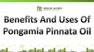Benefits And Uses Of Pongamia Pinnata Oil