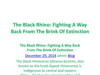 The Black Rhino: Fighting A Way Back From The Brink Of Extin