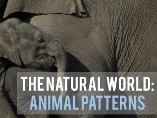 The Natural World Animal Patterns