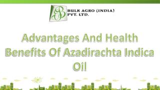 Advantages And Health Benefits Of Azadirachta Indica Oil