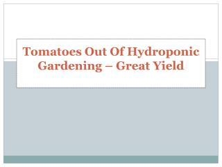 Tomatoes Out Of Hydroponic Gardening – Great Yield